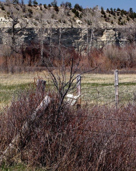 Pheasant Cover Along Fence at Greycliff Fishing Access MT