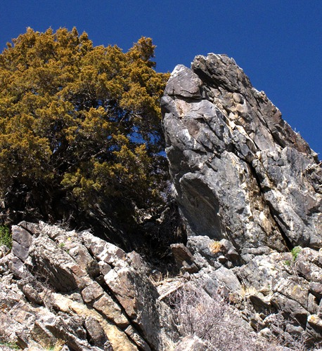 Rock and Juniper On Madison River Bluff