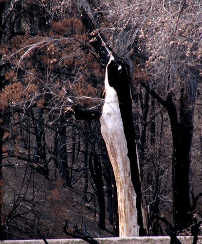 "Burned ""Bittern"" Following the 2008 Fire"