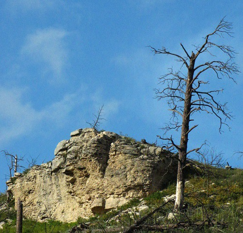 Cliff and Dead Tree on Pennington County Road 233